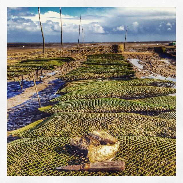 Les huîtres du bassin d'Arcachon