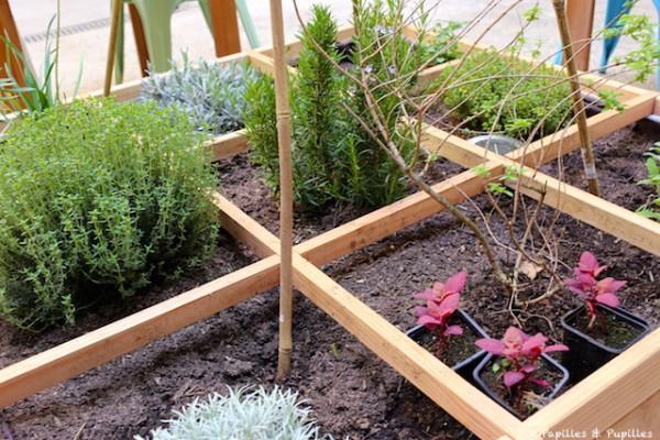 Petit jardin d'herbes aromatiques