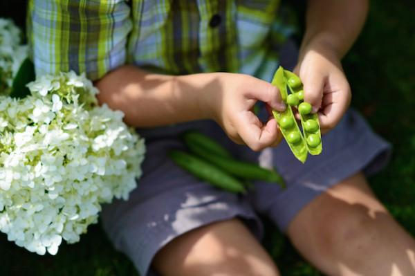 Velout glac de petits pois la menthe gaspacho - Quand semer les petit pois ...