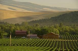 Les vignobles de Walla Walla