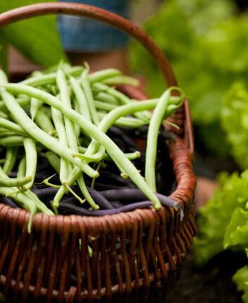 Haricots verts ©Kzenon shutterstock