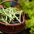 Haricots verts (c) Kzenon shutterstock