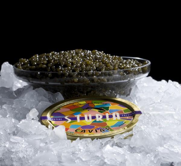 Caviar sur lit de glace