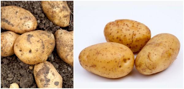 Pommes de terre - Samba