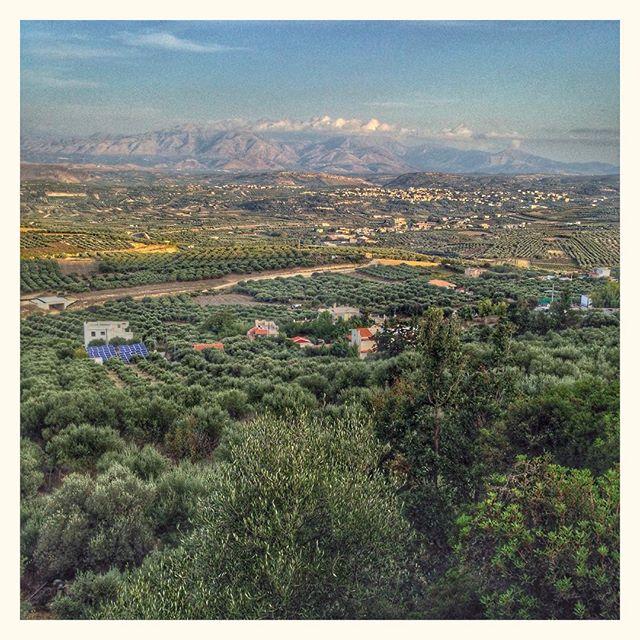 La richesse de la Crète - Des vignes et des oliviers