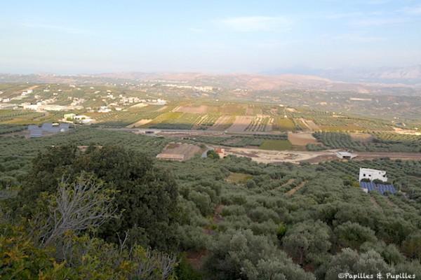 Peza - Des vignes et des oliviers