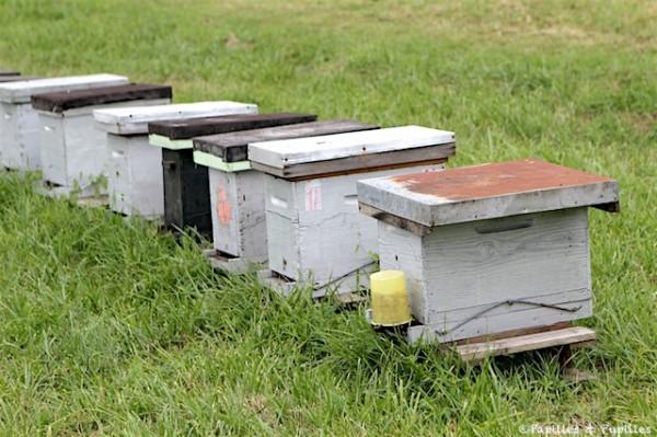 Ici les ruchettes servant à la fabrication des essaims