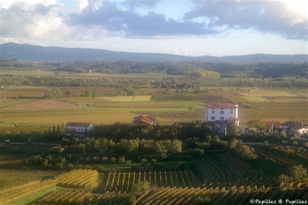 Vignes Slovénie