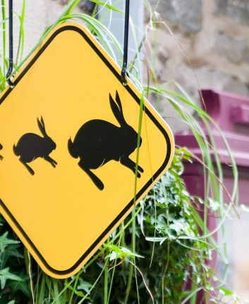 Attention lapins ©Mathieu Goulet Licence ©CC BY-ND 2.0