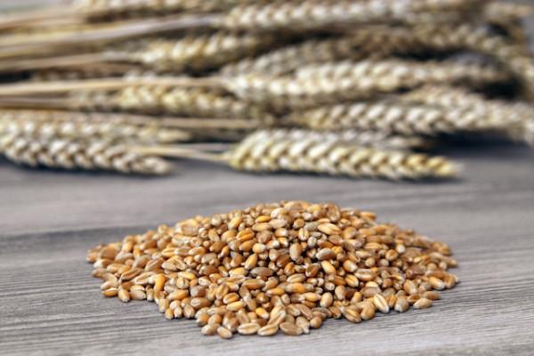Céréales ©Bildagentur-Zoonar-GmbH-shutterstock