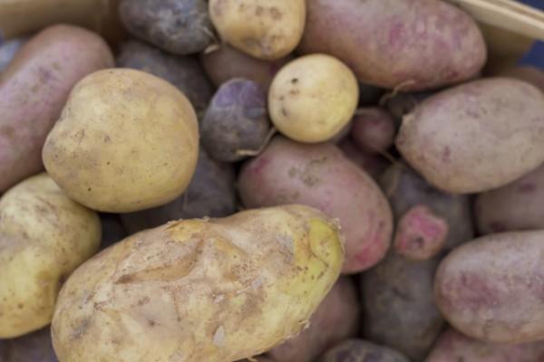 Pommes de terre (c) Ezume Images shutterstock