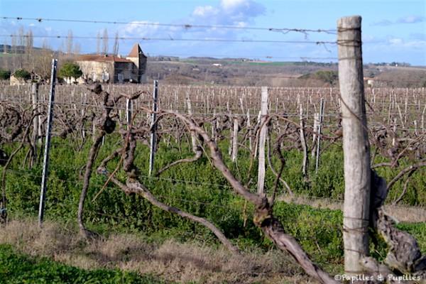 Dans le vignoble, Gascogne