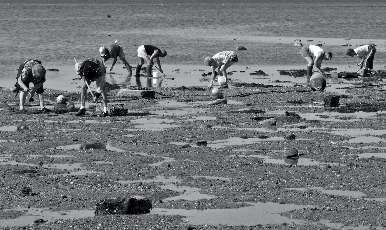 Pêche aux palourdes ©André Mouraux Spigoo CC BY 2.0