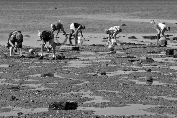 Pêche aux palourdes - Baie de Carnac (c) André Mouraux CC BY 2.0