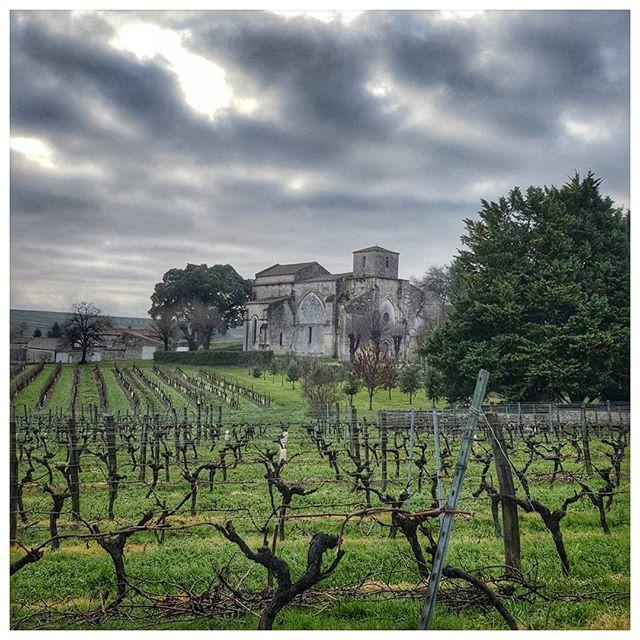 Taille de la vigne - Bouteville - Charente