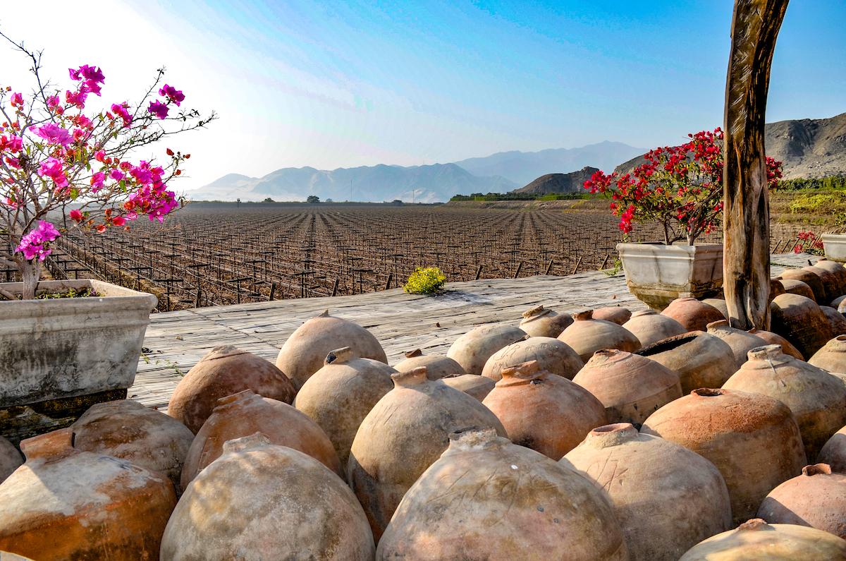Vignes - Production de Pisco - Pérou ©marktucan shutterstock