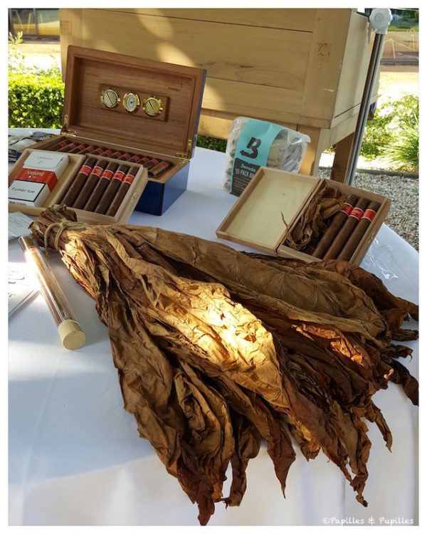 Les cigares de Madame de Navarre