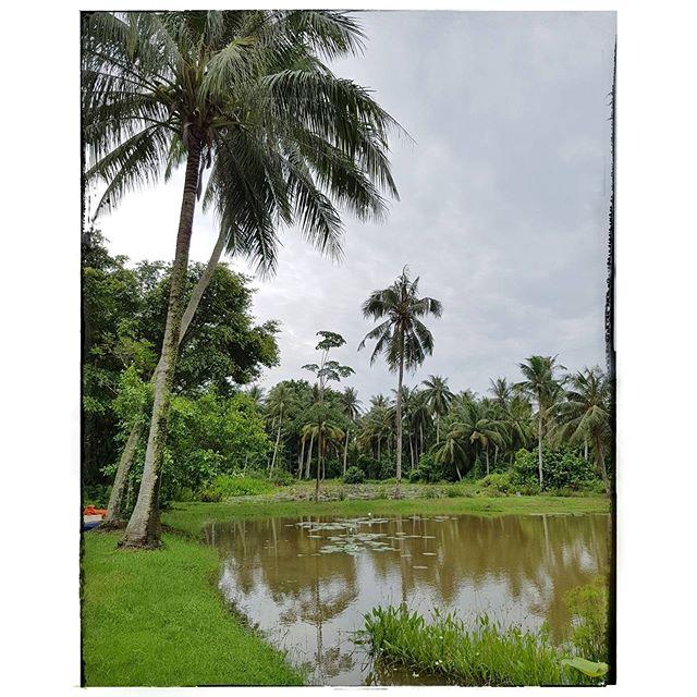 Dans la jungle de Pulau Ubin ! Singapour