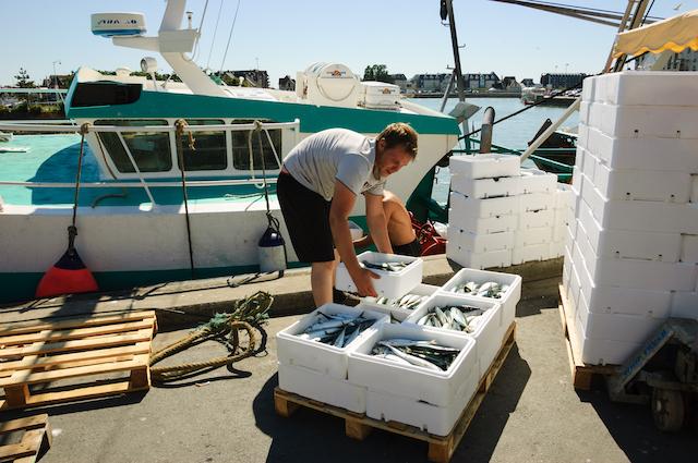 Débarquement des poissons - Trouville (c) Elena Dijour shutterstock