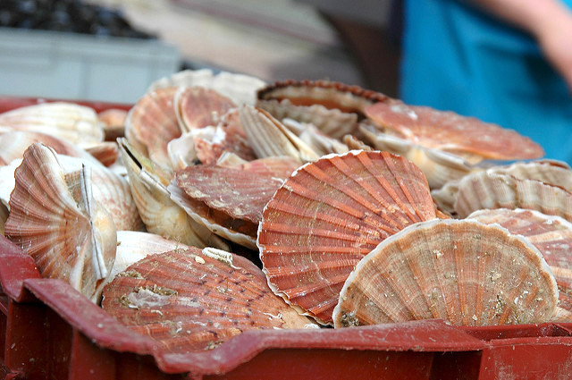 Coquilles Saint Jacques (c) Sue Kellerman CC BY-NC-ND 2.0
