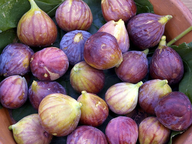 Figues (c) Bill Benzon CC BY-SA 2.0