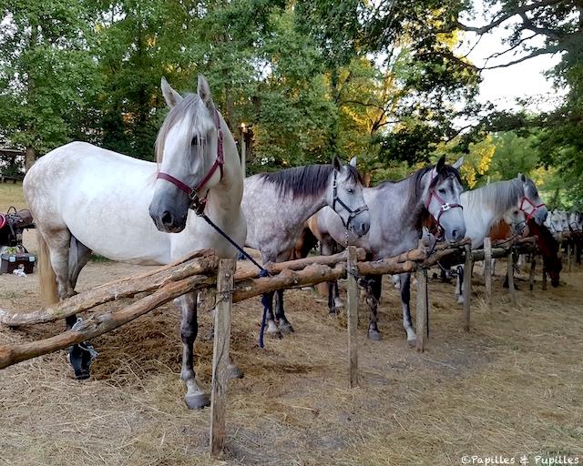 Les chevaux de la Bataille de Castillon