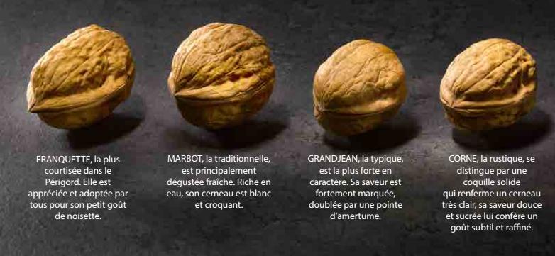 Noix du Périgord - Ses différentes variétés