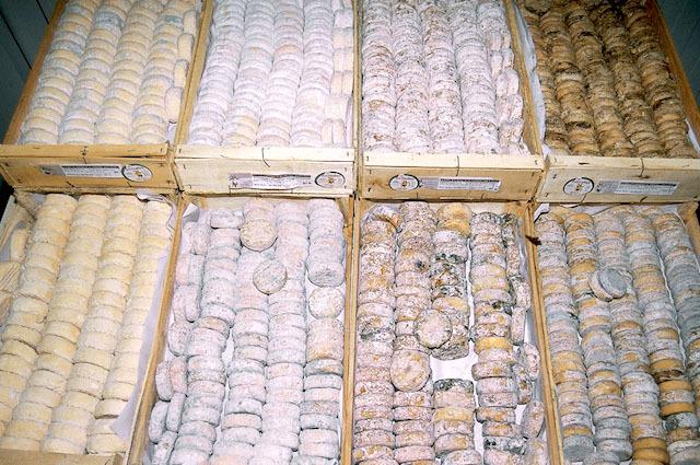 Picodons - Différents affinages (c) Picodon AOP