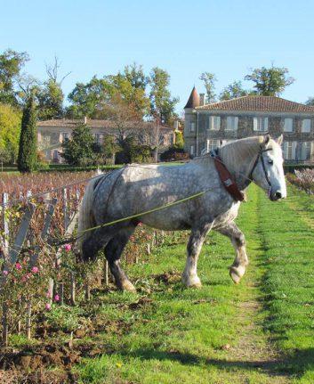 Les vignes de Troplong Mondot