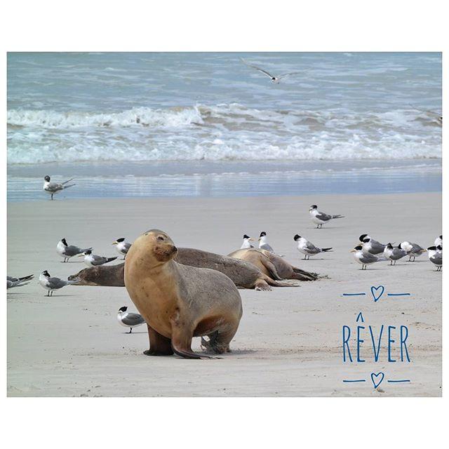 Kangaroo Island - Australie : prendre le temps de rêver #souvenirs #enPhase #activia