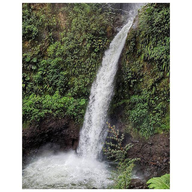 Cascade de la paix - Rain Forest - Monteverde - Costa Rica