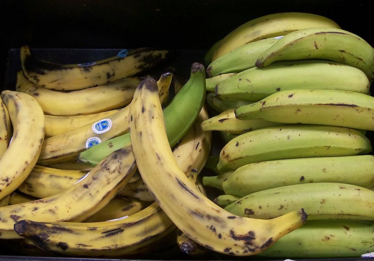 Bananes plantains mûres et non mûres (c)RD CC BY 2.0