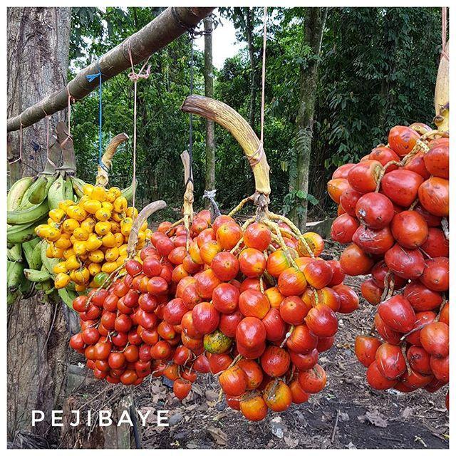 Pejibaye