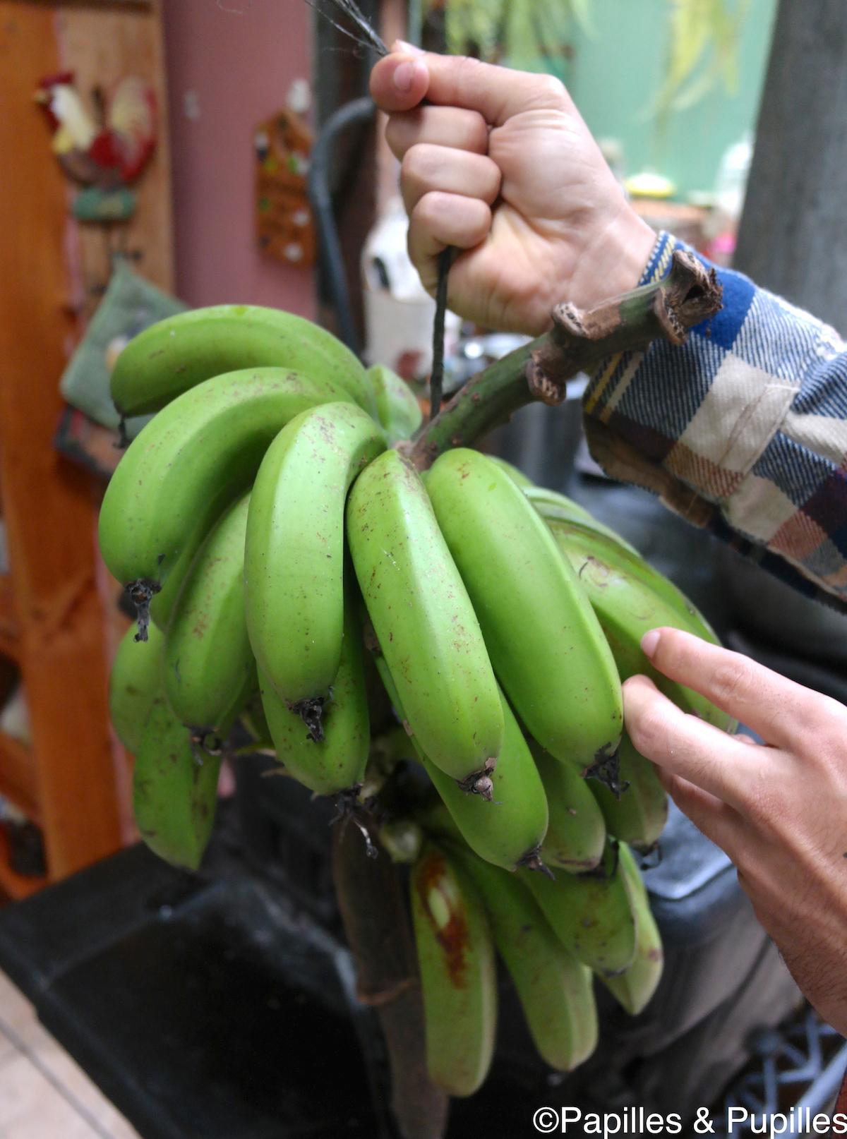 Bananes vertes (les jaunes pas encore mûres)