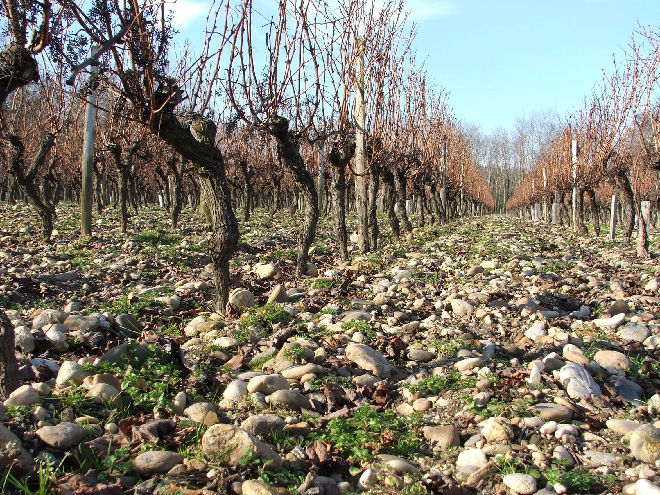 Sol des vignes, hiver