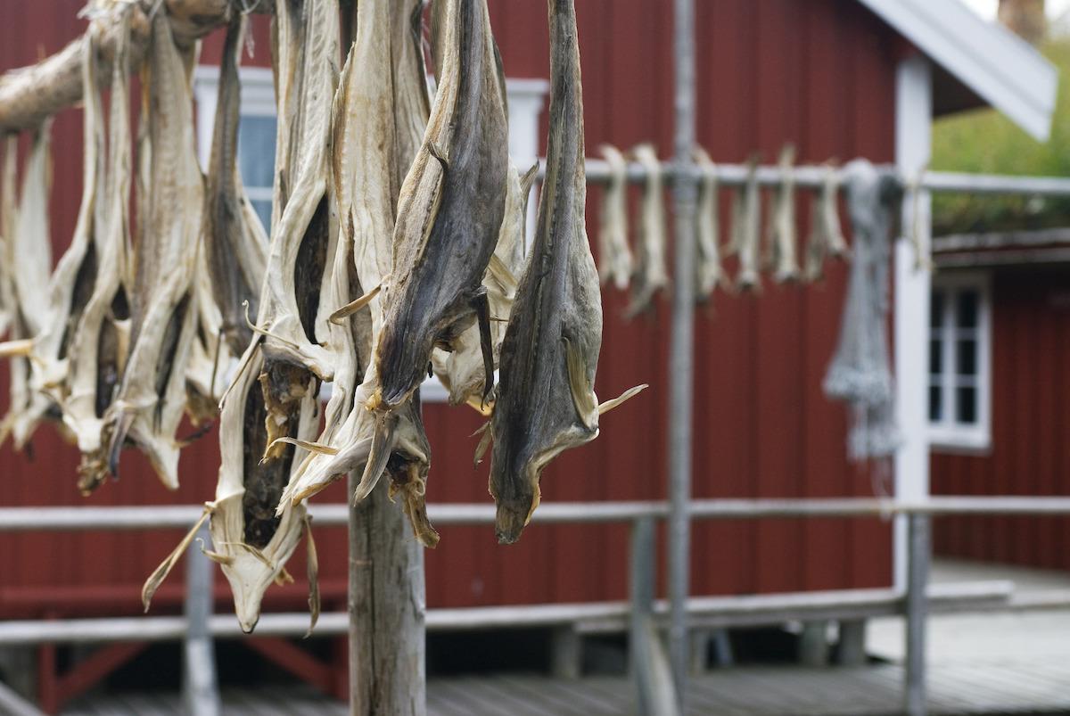 Stockfish - Reine - Iles Lofoten (c) Visit Norway