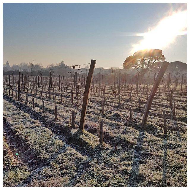 Aujourd'hui à l'heure où les vignes sont gelées ❄ 100 professionnels du monde du vin dégustent environ 1500 crus dont vous retrouverez une partie dans les foires aux vins Carrefour - c'est la 1ere étape de la sélection ; tous les vins recevant moins de 13/20 sont éliminés super intéressant