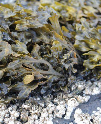Algues (c) Maurice Angres CC0 Pixabay - Public Domain