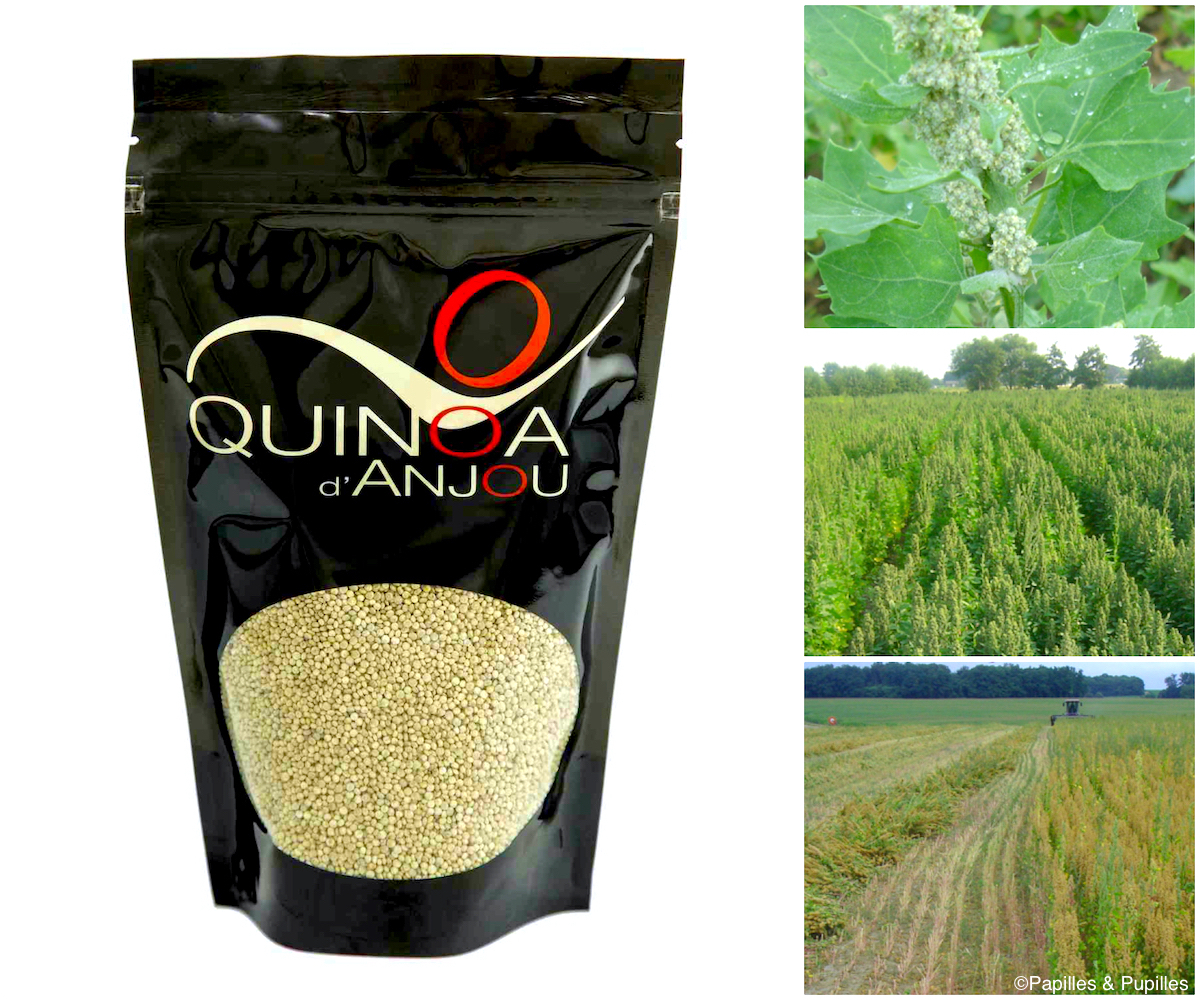 Quinoa d'Anjou