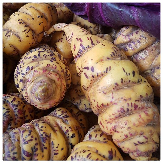 Ocas du Pérou ; un peu comme des pommes de terre mais en plus acide
