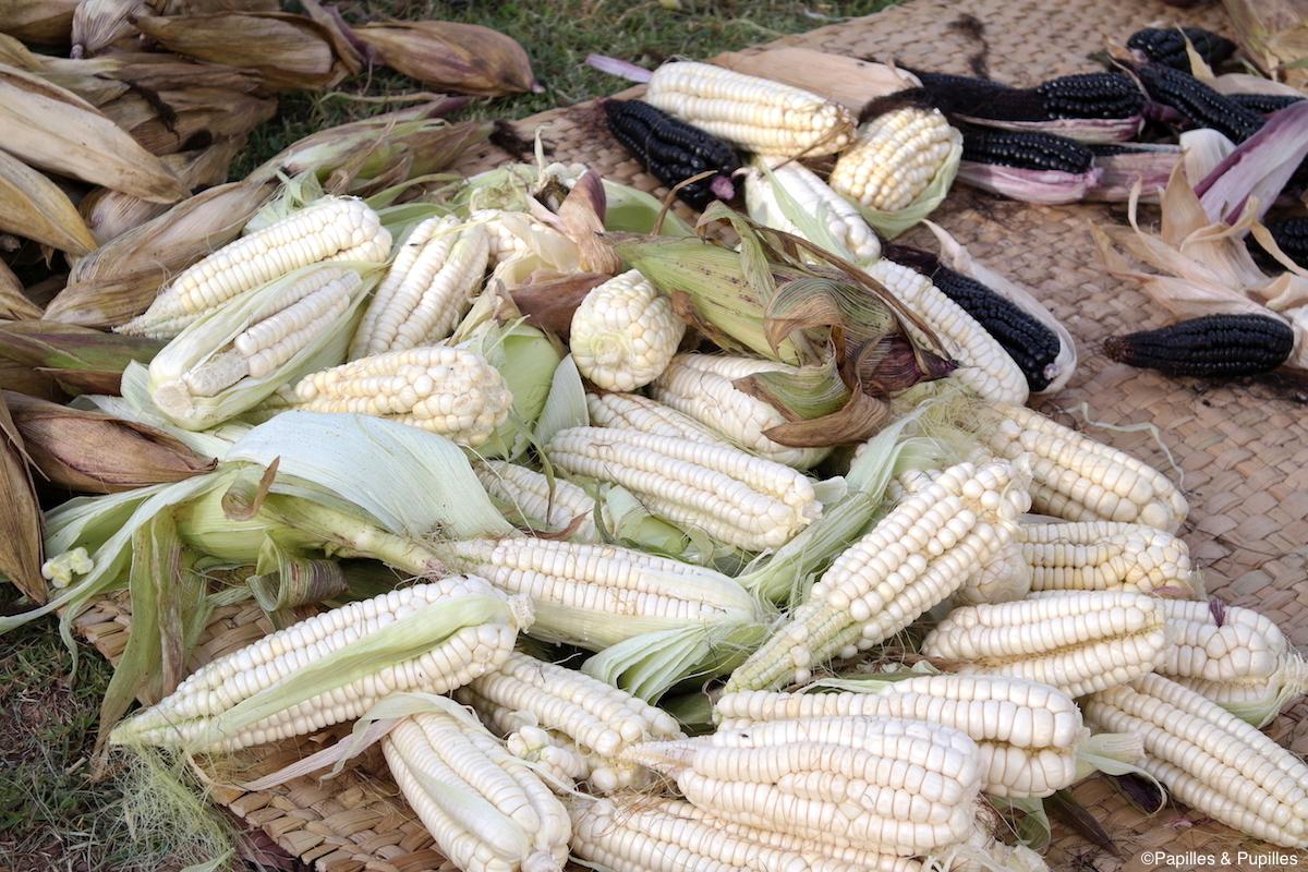 Maïs géant blanc de Cusco