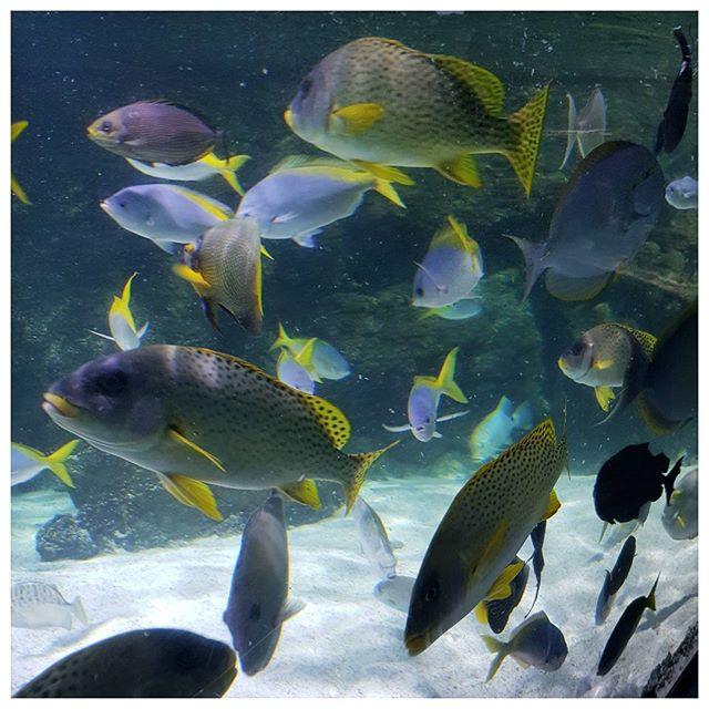 Lagon - Aquarium la Rochelle