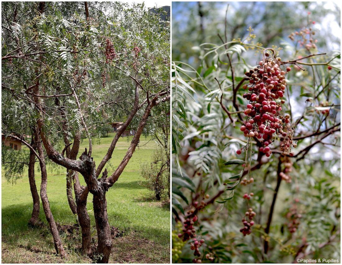 Molle - faux poivre Péruvien - Urubamba