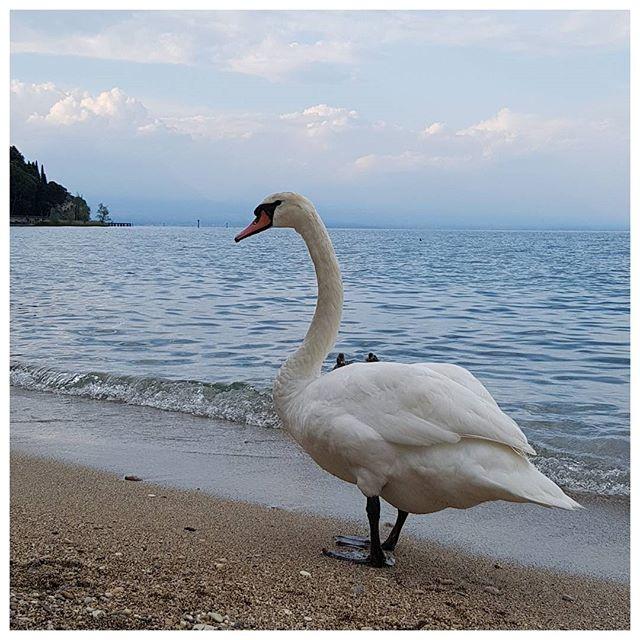 Sirmione, Lac de Garde