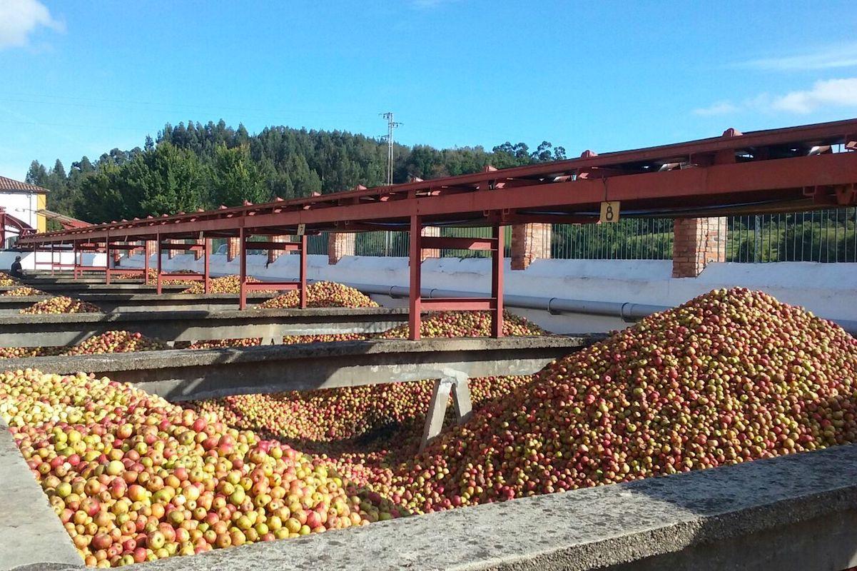 Arrivée des pommes - CIdrerie El Gaitero