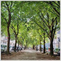 Cours Arnozan