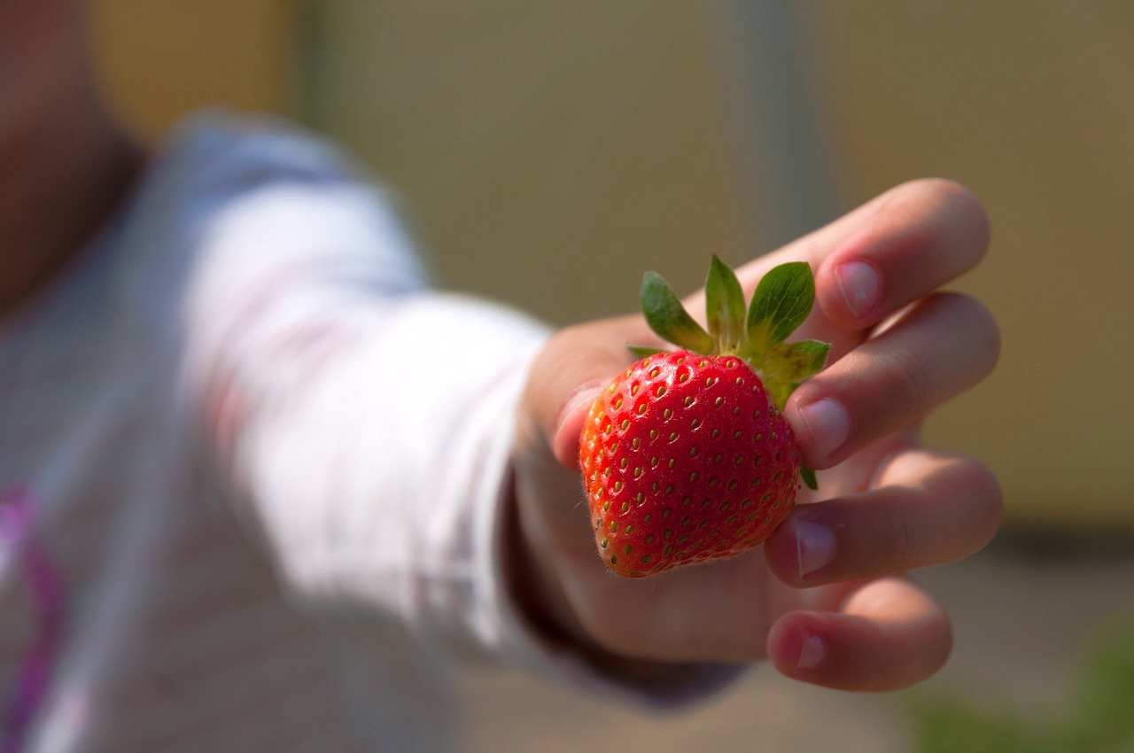 Fraise dans la main d'un enfant (c) Caropat CC0 Pixabay