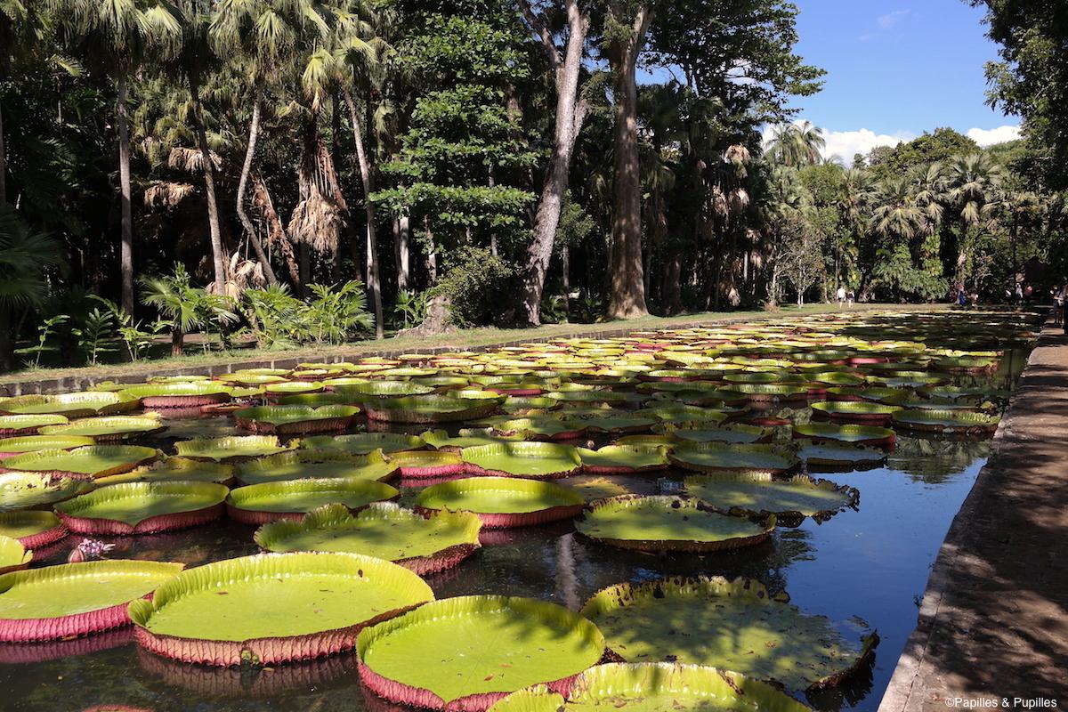 Jardins de Pamplemousse