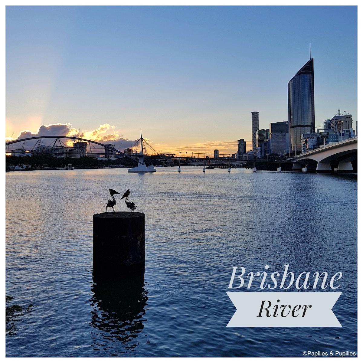 Pélicans - Brisbane River