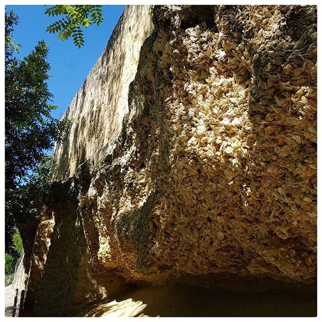 L'incroyable falaise d'huîtres fossiles de Sainte Croix Du Mont.